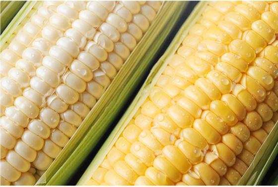 초당옥수수(오른쪽)은 일반 찰옥수수에 비해 색이 노랗고 당도가 높다. [사진 식탁이 있는 삶]