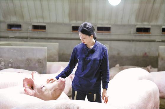 선진은 2012년부터 선진 동물복지 시스템을 도입, 국내 최초의 동물복지 양돈농장인 '제일종축'을 비롯해 국내 양돈 분야의 동물복지 농장 중 절반 이상을 조성했다. [사진 선진]