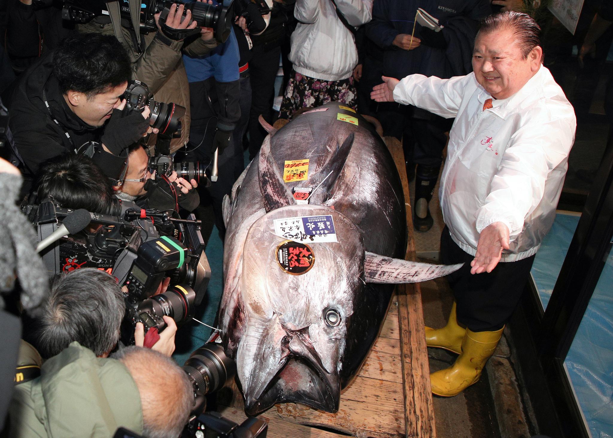 일본 요식업체 '스시 잔마이'의 기무라 기요시 대표(오른쪽)가 5일 도쿄 도요스 시장에서 1억9000만엔(약 20억8000만원)에 낙찰받은 무게 276kg 참치를 취재진에게 공개하고 있다. [EPA=연합뉴스]