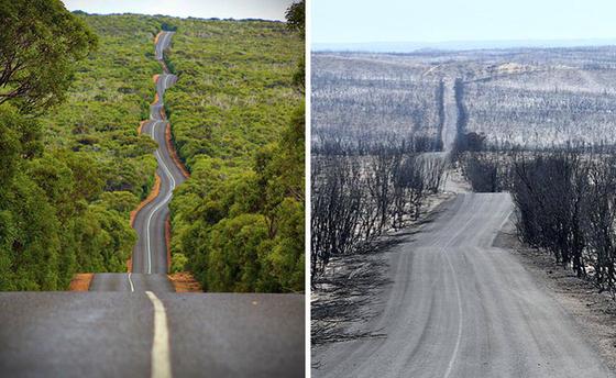 호주 산불이 발생하기 전 캥거루 섬의 모습(왼쪽 사진)과 화재로 잿더미로 변한 캥거루 섬의 모습. [사진 트위터]