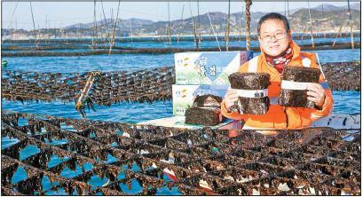 윤기제씨가 지주식 김 양식장에서 사진을 찍었다. 물 밖으로 드러난 발에 새까맣게 붙은 게 물김이다. 프리랜서 장정필
