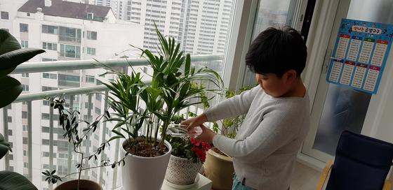 김윤수 학생기자가 집안 반려식물에 물을 주고 있다.