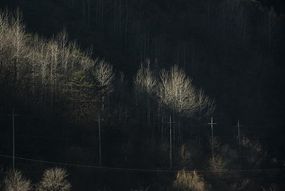 사진1 겨울나무, 2016 [사진 주기중]