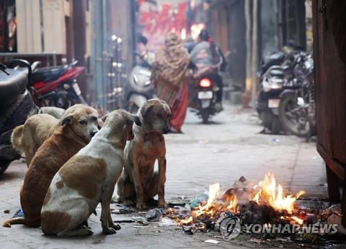 모닥불가에 모여있는 인도의 떠돌이 개. [EPA=연합뉴스]