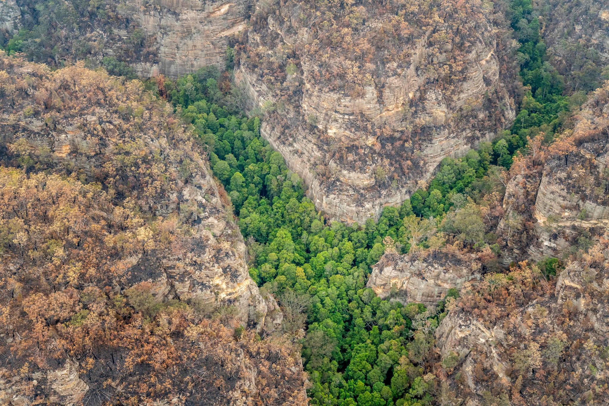 지난 9일(현지시간) 촬영된 항공 사진. 호주 소방관들이 화마로부터 지켜낸 '울레미 소나무' 군락지가 초록빛이다. [AFP=연합뉴스]