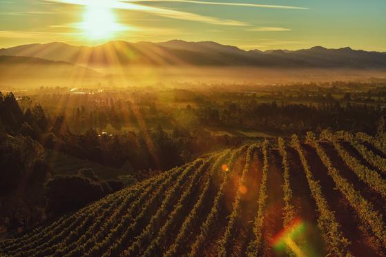 미국을 대표하는 와인 산지인 나파 밸리에서도 레스토랑 위크가 열린다. [사진 캘리포니아관광청]
