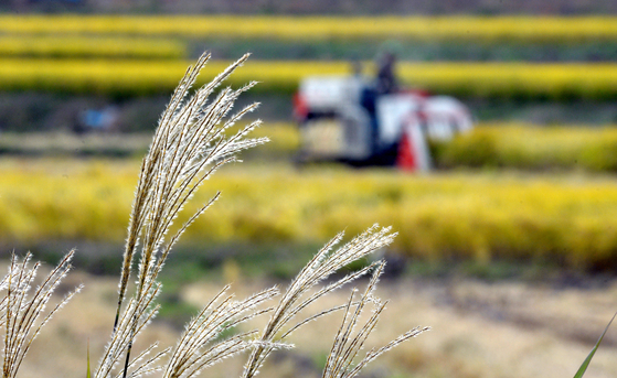 올해 농가 소득이 지난해보다 5.3% 증가한 4490만원이 될 것이라는 전망이 나왔다. 사진은 지난해 10월 대전 성북동 들녘에서 농민이 콤바인을 이용, 벼를 수확하는 모습. [중앙포토]