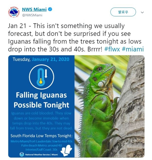 미국 국립기상청(NWS) 플로리다주 마이애미 지부가 트위터로 '이구아나 경고 메시지'를 내보냈다. [NWS 마이애미 지부 트위터=연합뉴스]