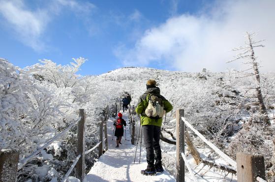 한라산은 겨울에 더 아름다운 산이다. 해발 1950m로 남한에서 제일 높은 산이다 보니 어지간하면 정상부가 눈으로 덮여 있다. 산 아래 세상이 미세먼지로 자욱해도 산 위의 세상은 청정하다. 해종일 산행을 감내해야 이런 장관을 만끽할 수 있다.