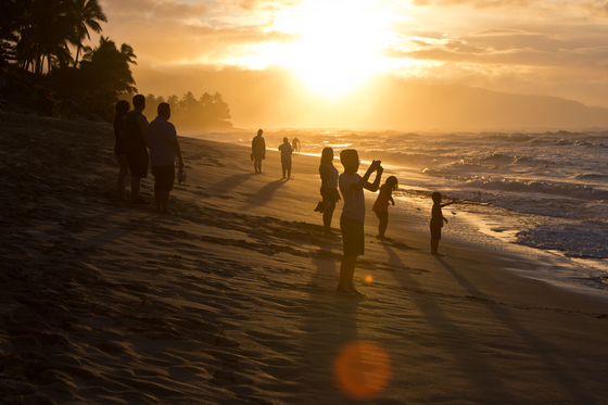 하와이 오아후 섬 '노스 쇼어'는 서퍼 사이에서 명품 파도가 찾아오는 지역으로 유명하다. 수준급 서퍼는 집채만 한 파도를 타고 서핑을 못하는 사람은 해안선에 늘어서서 그 모습을 감상한다. 최승표 기자