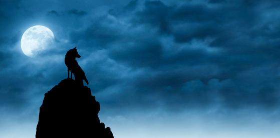 예로부터 달은 동물의 행동에 영향을 준다고 여겨졌는데, 보름달을 보고 짖는 늑대의 이미지는 워낙 유명하다.