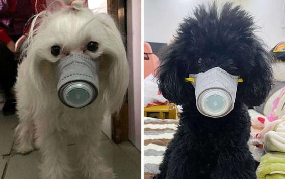 신종 코로나바이러스 영향으로 강아지 마스크까지 등장했다. [사진 저우톈샤오]