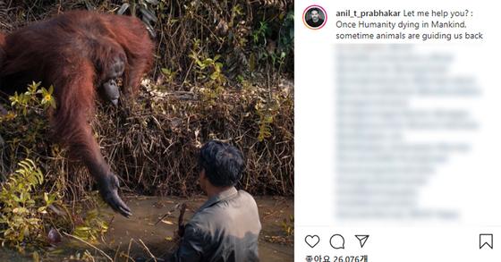 인도네시아 보르네오섬의 한 오랑우탄 보호구역에서 물속에 있는 사람을 향해 오랑우탄이 손을 내밀고 있다. [아닐 프라브하카 인스타그램캡처]