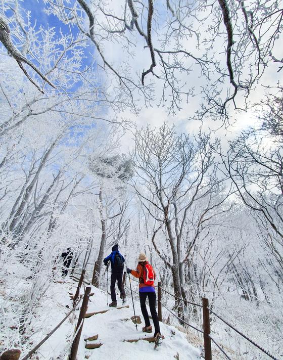 시린 겨울을 즐길 날도 얼마 안 남았다. 사람 많은 곳이 꺼려진다면 청량한 공기를 쐬며 눈길을 걸을 수 있는 산으로 가보는 건 어떨까. 지난 8일, 소백산 비로봉 오르는 길에 겨울왕국 같은 풍경을 만났다. 최승표 기자