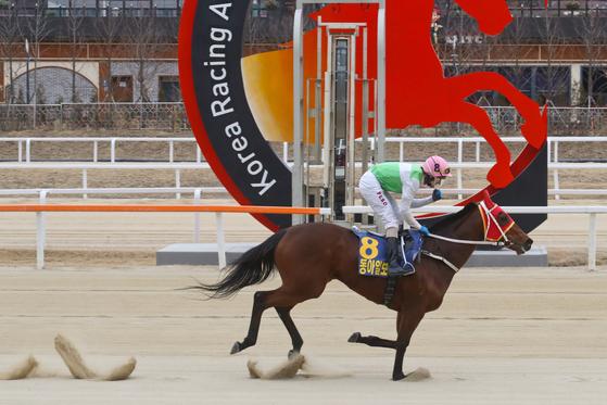 실버울프가 2018년 동아일보배에서 1위로 결승선을 통과하고 있다. 한국마사회 제공