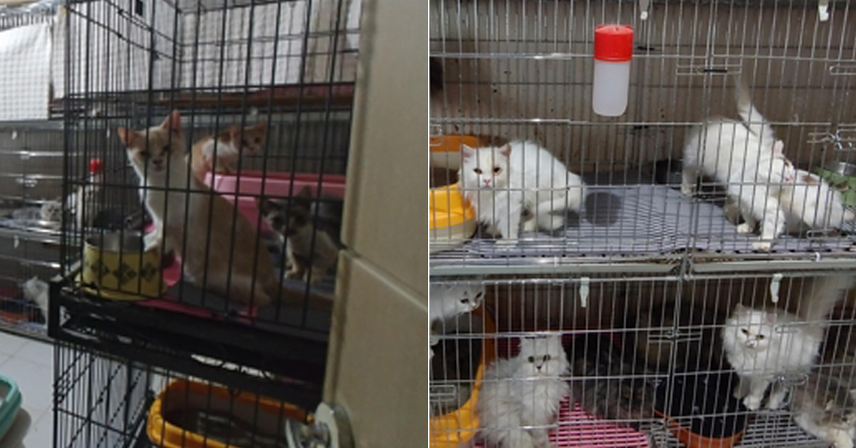 부산의 한 주택에서 철창에 갇힌 채 발견된 고양이들. [부산경찰서=연합뉴스]