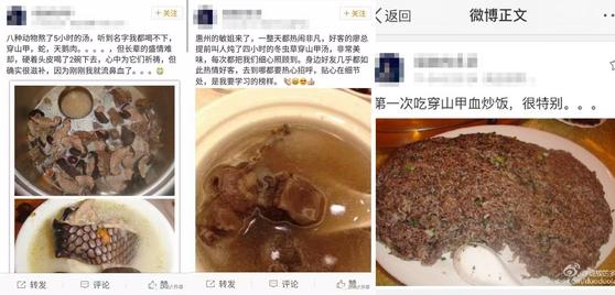 2011년 중국 소셜미디어 웨이보에 올라온 천산갑 요리 게시물. 게시자는 천산갑 요리를 처음 먹어봤다며 맛이 좋고 활력이 생겼다는 글을 남겼다. [중국 소셜미디어 웨이보]