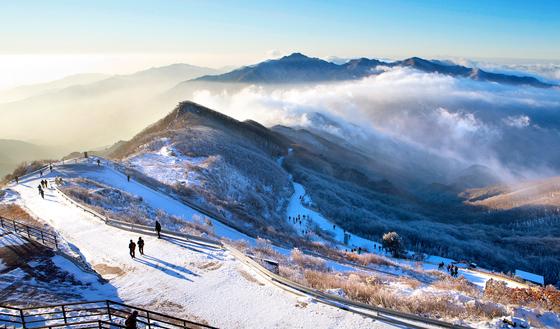 겨울이 지나기 전에 눈꽃 산행을 경험하고 싶다면 소백산이 좋겠다. 산새가 순해 등산 초보도 도전해 볼 만한 하다. 사진은 연화봉 대피소에서 내려다본 소백산 정상부의 능선. [중앙포토]