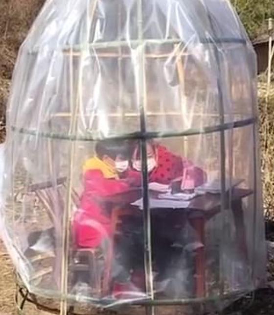 중국 후베이성에 사는 한 어머니가 초등생인 딸을 위해 직접 만든 독서실. 신종 코로나 예방을 위해 비닐과 대나무를 이용해 텐트 형태로 만들었다. [사진 웨이보 캡처]