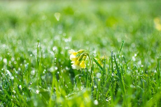 이슬 머금은 시 같은 꽃이 피어난다면. [사진 Pexels]