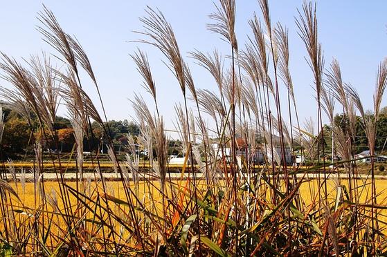 농업유산은 그동안 도시화와 농업의 후퇴로 등한시됐으나 지금은 세계적으로 중요한 유산으로 인정받고 있다. [사진 pixabay]