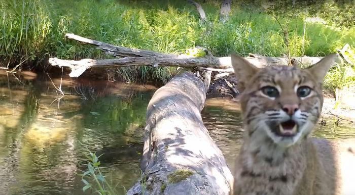 미국 펜실베이니아에 거주하는 로버트 부시가 그의 집 인근의 한 통나무 다리에 설치한 카메라를 통해 촬영한 야생동물들. [밥스 펜실베이니아 와일드카메라 캡처]