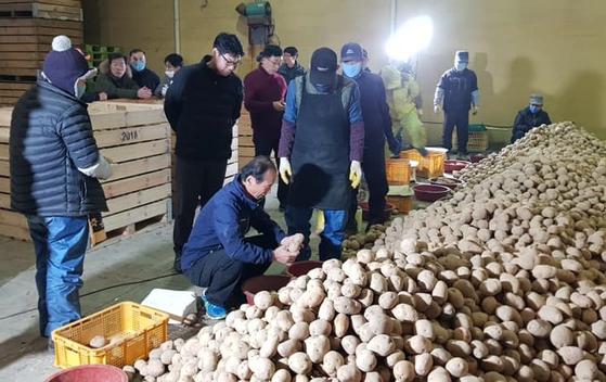 최문순 강원도지사가 지난 14일 농가를 찾아 감자 크기 선별을 하는 등 일손을 돕고 있다. 최문순 지사 페이스북 캡처