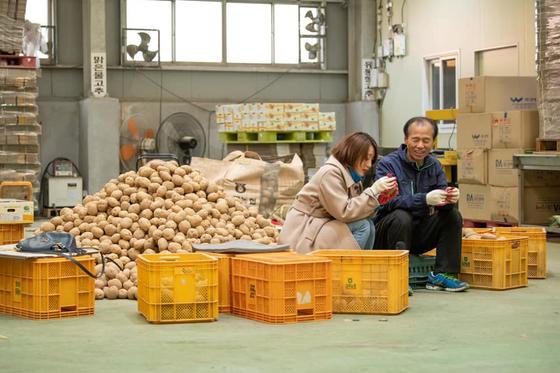 '감자 판매'에 나선 최문순 강원도지사가 연일 매진 기록을 이어가고 있다. [사진 최문순 지사 페이스북]