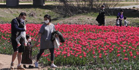 18일 부산 북구 화명생태공원에 튤립이 활짝 펴 산책 나온 시민들에게 봄소식을 전하고 있다.송봉근 기자