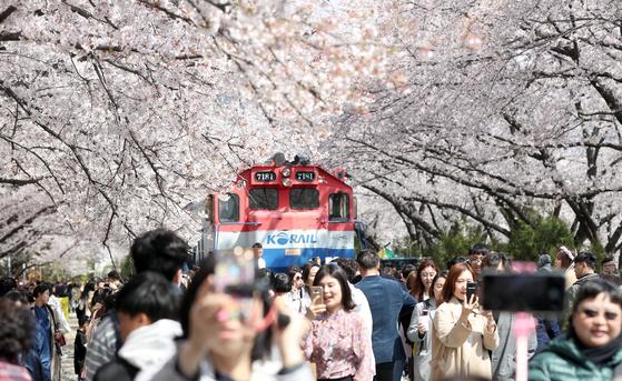 지난해 4월 1일 제57회 진해군항제 개막일에 경남 창원시 진해구 경화역 일대 벚꽃 나무가 활짝 펴 관광객과 시민의 발길이 이어졌다. 연합뉴스