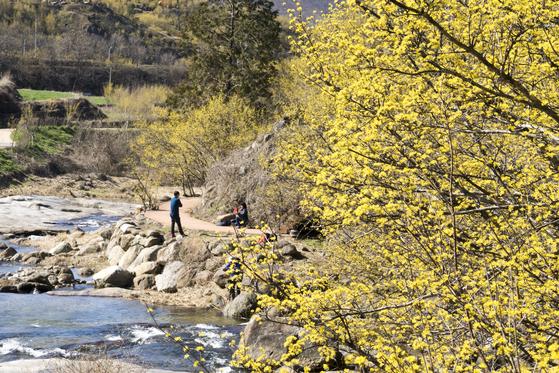 구례 산수유마을 반곡마을. 백종현 기자