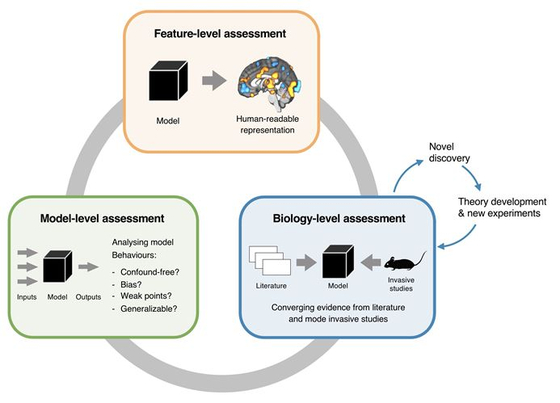 블랙박스라고 알려진 뇌영상 기반 인공지능 모델의 해석을 모델, 예측 변수, 생물학의 세 가지 수준으로 병렬적으로 접근, 위계적이고 체계적인 새로운 분석 시스템을 구축 및 제안하였다.