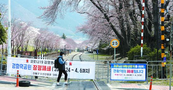지난해 400만명이 찾았던 진해군항제가 올해 취소된 데 이어 경화역공원이 24일 부터 내달 6일까지 폐쇄된다. 송봉근 기자