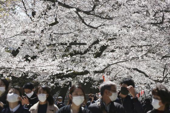 벚꽃이 핀 도쿄. 시민들이 마스크를 쓰고 꽃구경을 하고 있다. [AP=연합뉴스]
