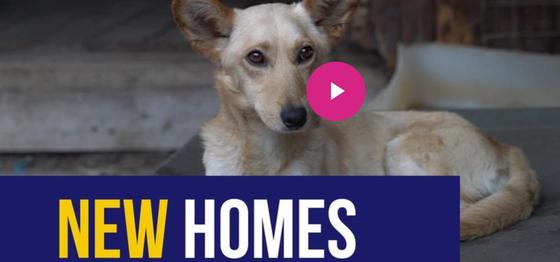 봉쇄령 속 새 집을 찾은 남아공 개들. 뉴스24 홈페이지 캡처=연합뉴스