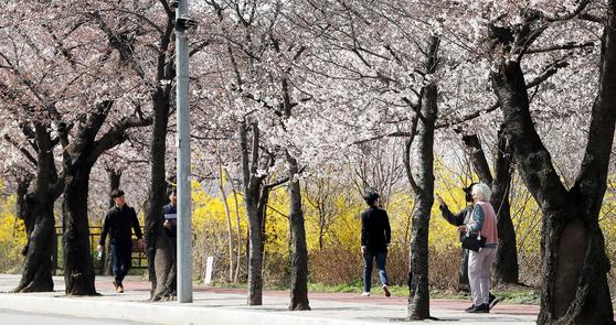 27일 서울 여의도 윤중로에 벚꽃이 활짝 피어 있다. 한편 이날 정부는 이번 주말 야외활동을 자제하고 사회적 거리두기에 동참해 줄 것을 호소했다. [뉴스1]