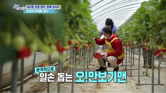 '6시 내고향'에서 코로나19 여파로 고생하고 있는 딸기 농가를 찾은 배우 이정용. [사진 KBS]