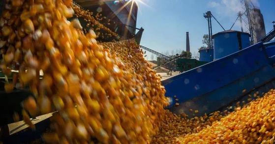 유엔 식량농업기구(FAO)는 신종 코로나 사태로 곡물 수송과 가축 사육 등에서 큰 도전을 받고 있다면서 4~5월 세계적으로 식량 위기가 올 수 있다고 경고했다. [중국 환구망 캡처]