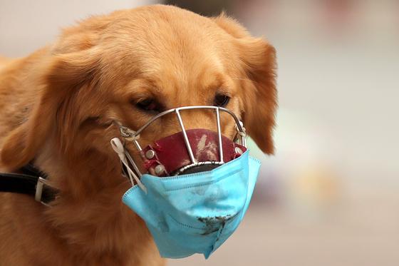개가 코로나 옮긴다? 레바논서 거품 물고 죽어가는 반려견