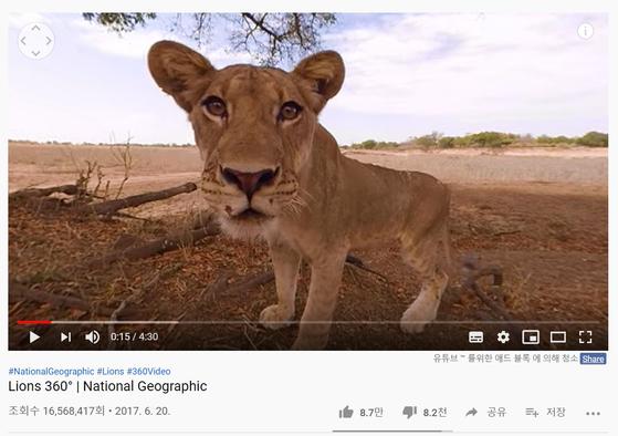 내셔널 지오그래픽의 아프리카 사자 VR 영상. 유튜브 조회 수가 약 1600만 건에 이른다. [사진 유튜브 캡처]