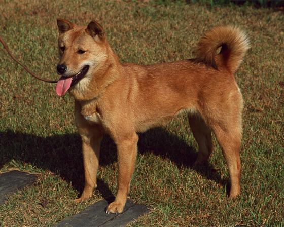 [더오래]우리 개는 특별해! 큰소리 치고 훈련소 데려갔더니