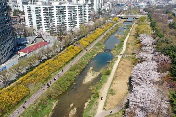 완연한 봄 날씨가 이어진 5일 오후 경기도 안양시 동안구 학의천 일대에서 시민들이 봄꽃과 함께 산책하고 있다. 뉴스1