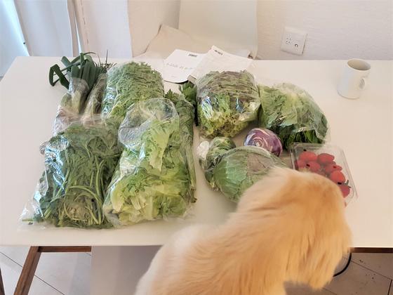 농부님께 채소를 받으면 이맘때는 자연재배 딸기도 함께오곤 한다. 우리 집 개도 이 딸기가 무척 맛있다는 것을 아는 것 같다. [사진 강하라]