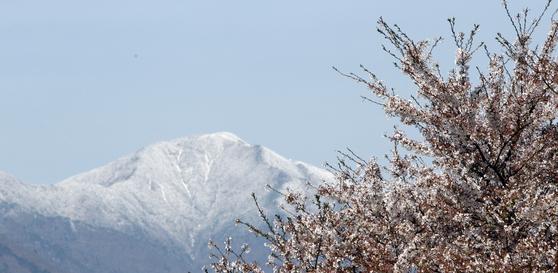 지난 12일에 내린 눈이 설악산 대청봉에 쌓여있다. 저지대에는 봄꽃이 피어있다. 22일 서울에 눈과 비가 섞여내리는 진눈깨비가 관측돼, 기상관측 이래 가장 늦은 서울의 봄눈을 기록했다. 연합뉴스