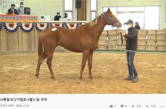 지난 21일 코로나19로 경마가 중단되자, 말 경매가 최초로 유튜브를 통해 이뤄졌다. 한국내륙말생산자협회 유튜브 캡쳐