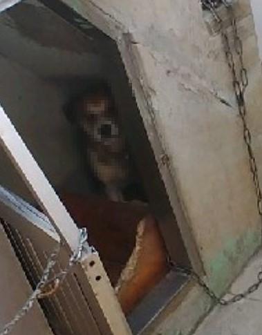 부산의 한 사찰에서 절을 하던 50대 여성이 개에 물려 다치는 일이 발생했다. 뉴스1