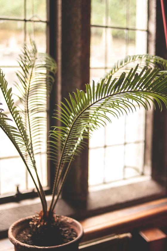 식물 잘 키우는 사람은 따로 있다고 말했지만, 식물을 잘 키우는 남편의 비밀은 관심과 기다림이었습니다. [사진 Pexels]