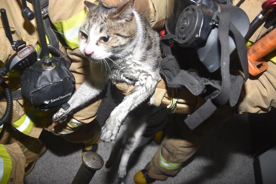 2017년부터 2019년까지 119구급대 동물구조 출동 가운데 가장 많은 건을 차지한 것은 '고양이 구조'였다. [사진 서울시 소방재난본부]
