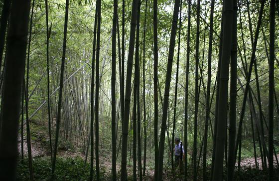 한적한 자연을 걷는 것만큼 거리두기를 실천하는 여행도 드물다. 어린이날 연휴 가족과 함께 전국의 이름난 걷기여행길을 걸어보시라 권한다. 사진은 지리산둘레길 대숲길. 손민호 기자
