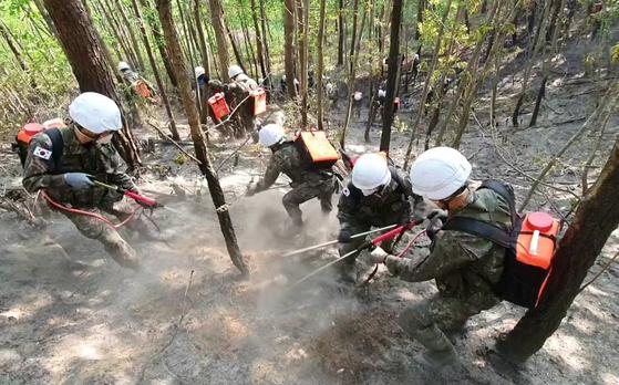 강원 고성군 토성면 산불의 큰 불길이 12시간 만에 잡힌 지난 2일 오전 화재 현장에서 육군 8군단 소속 장병들이 잔불 제거 작업을 하고 있다. 사진 육군 8군단